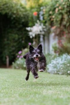 #moidutoiphotography #dogphotography #caninephotography #sedgefield photographer #knysna photogapher #george photographer #gardenroute photographer