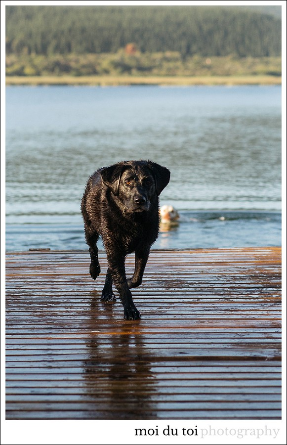 Sedgefield photographer, dog photographer garden route, Groenvlei lake, Labradors