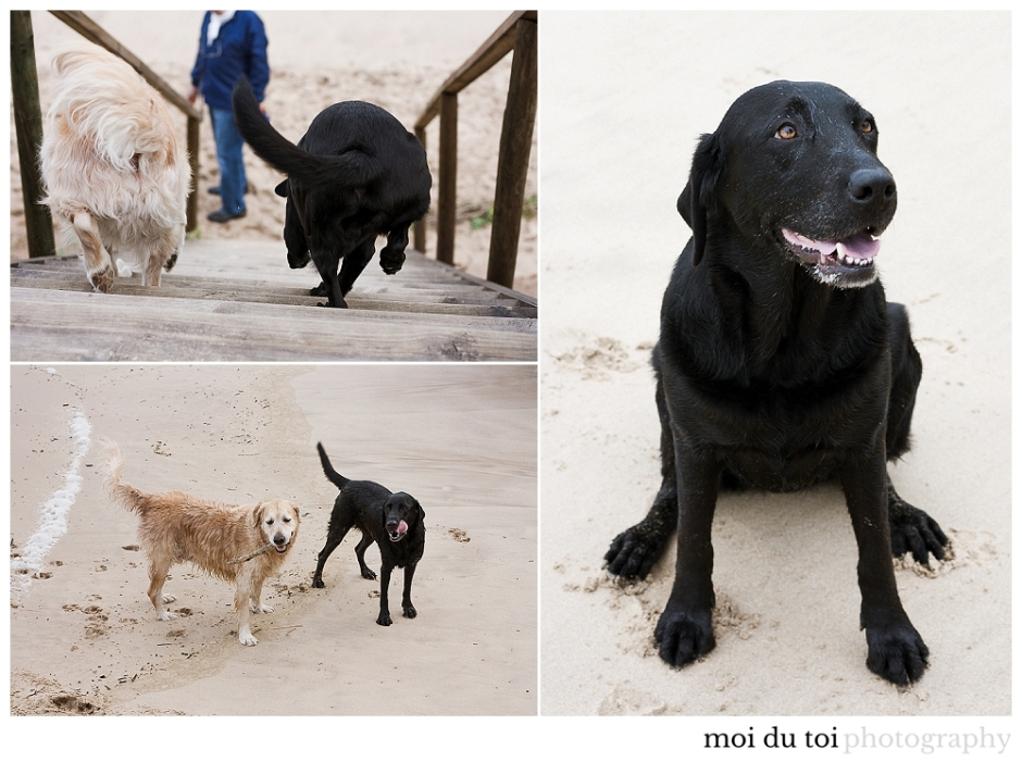 pet photographer sedgefield knysna, sedgefield family photographer, Knysna family photographer,