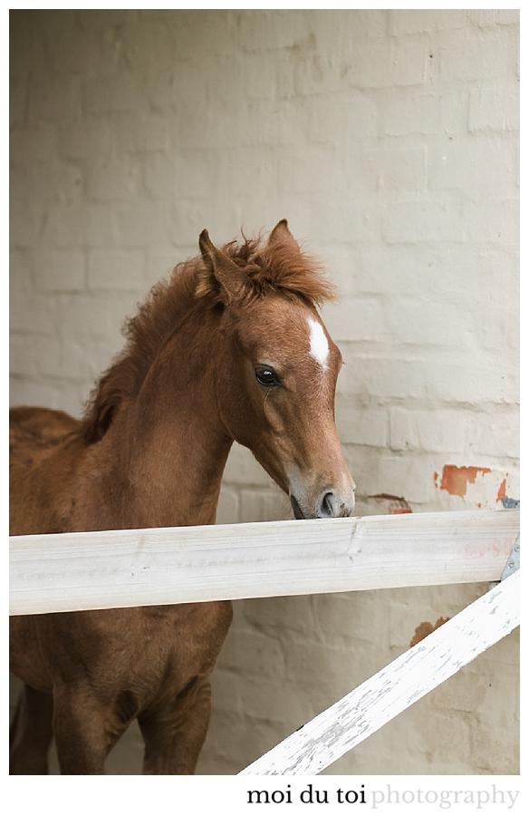 Equine photographer Knysna, Horse photographer Sedgefield