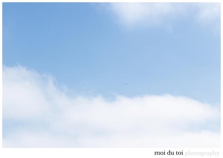 blue skys myoli beach seagulls