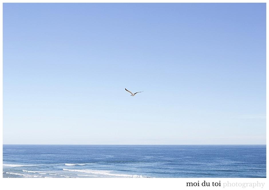 Seagulls Myoli beach