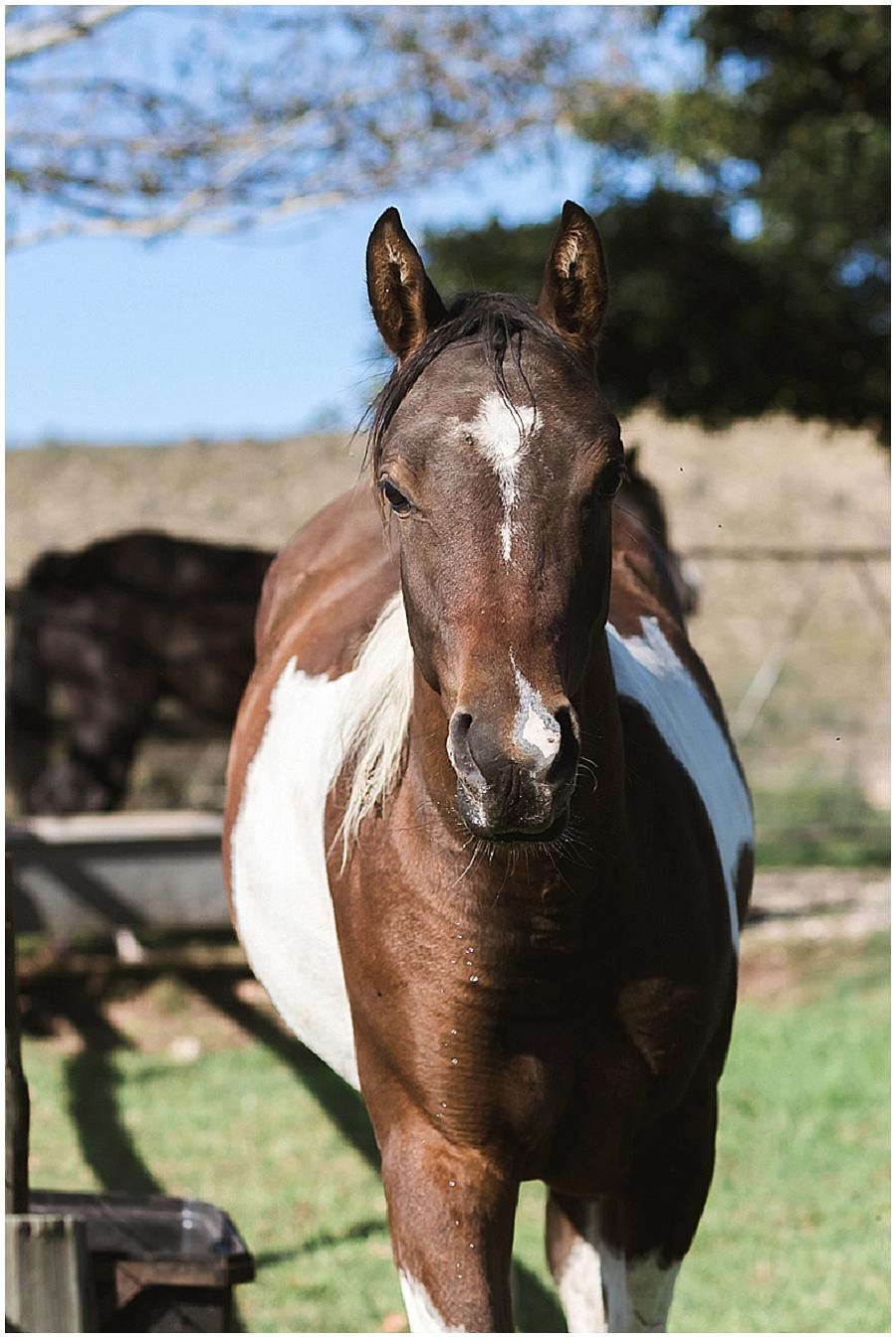 Arabian and Pintabian Horses of Oxbow Farm moi du toi photography