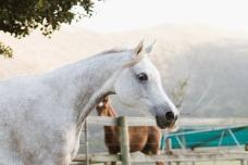 Sedgefield Knysna equine photographer-moi du toi photography-7433