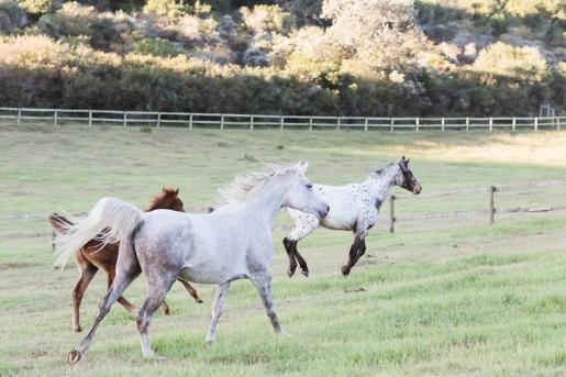 Sedgefield Knysna equine photographer-moi du toi photography-8566