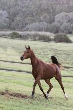 Sedgefield Knysna equine photographer-moi du toi photography-8617
