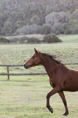 Sedgefield Knysna equine photographer-moi du toi photography-8645