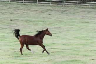 Sedgefield Knysna equine photographer-moi du toi photography-8714