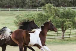 Sedgefield Knysna equine photographer-moi du toi photography-8829