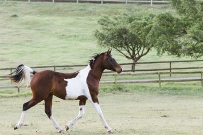 Sedgefield Knysna equine photographer-moi du toi photography-8986