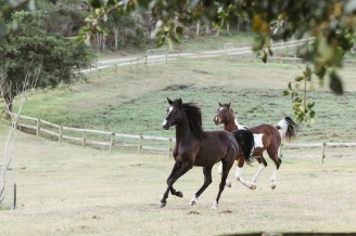Sedgefield Knysna equine photographer-moi du toi photography-9036