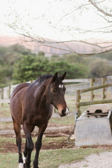 Sedgefield Knysna equine photographer-moi du toi photography-9100