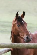 Sedgefield Knysna equine photographer-moi du toi photography-9137