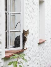 Cat portrait garden route