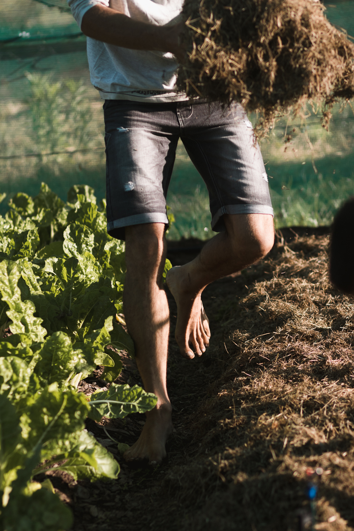knysna and garden route photographer moi du toi photographs the sedgefield market garden group harvesting organic vegetables