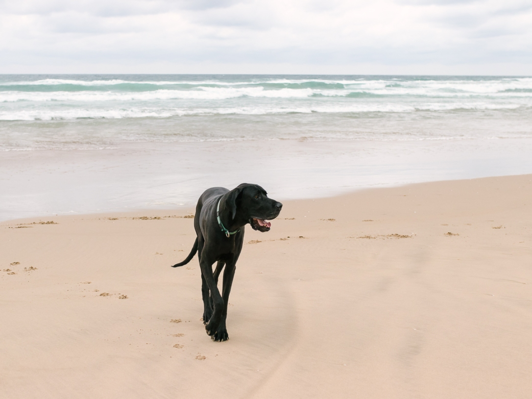 Pet photo session at Myoli beach Sedgefield with garden route photographer moi du toi photography