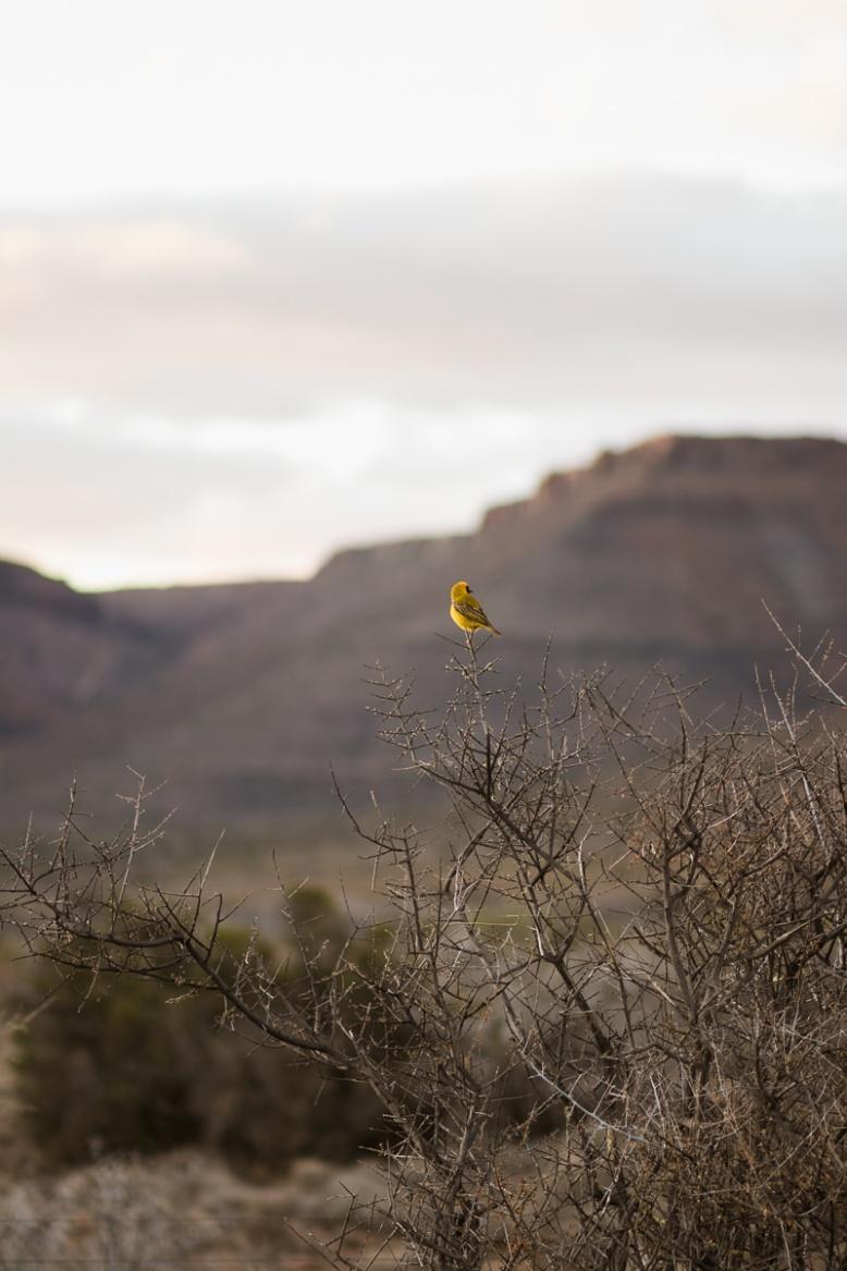 Karoo, moi du toi photography, sedgefield photographer
