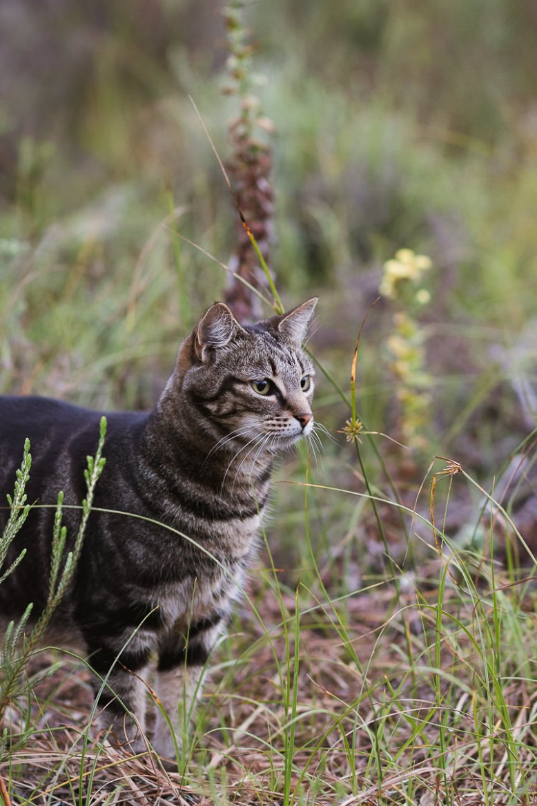 Cat outdoors real estate bnb photo shoot at Equleni sedgefield garden route photographer moi du to